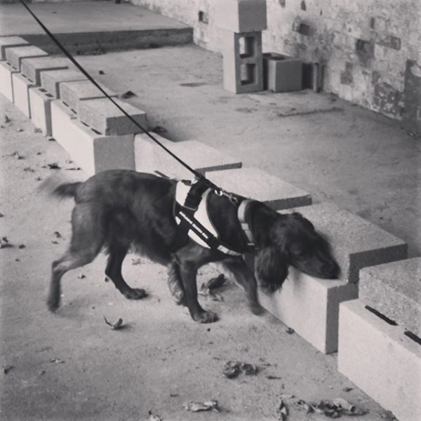 Explosive Detection Dog HME